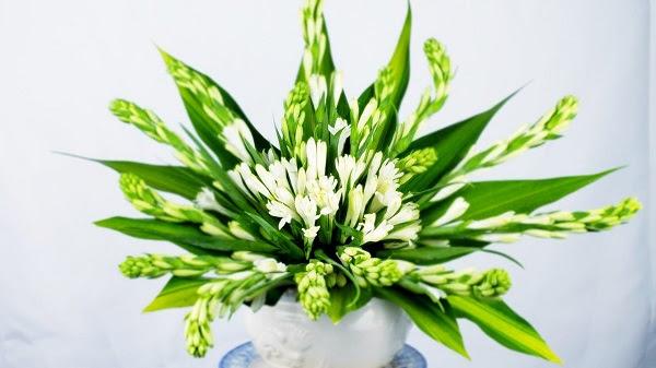Hoa huệ trắng không nên làm hoa chúc mừng sinh nhật